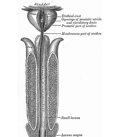 Prostatite cronica terapia